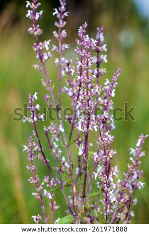 Wild pink spring flowers on green meadow - stock photo