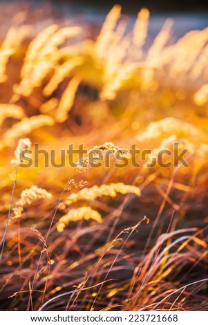 Wild plant grown in an autumn field.
