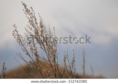 Wild plant on blur nature background - stock photo