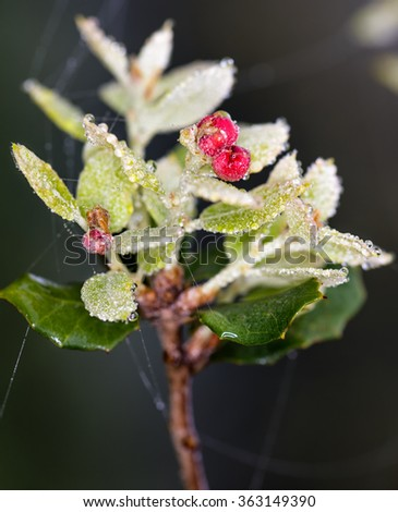 Wild plant photographed after rain - stock photo