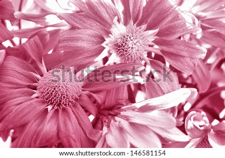 wild purple flowers texture - high contrast  - stock photo