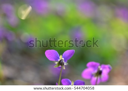 Wild purple flowers with blurry green background