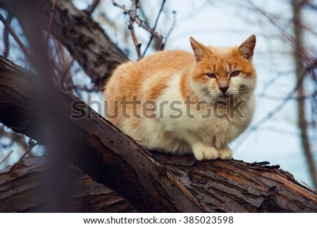 Wild red cat sits on a tree in the forest - stock photo