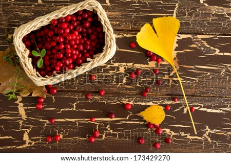Wild red cowberry and ginkgo leaf - stock photo