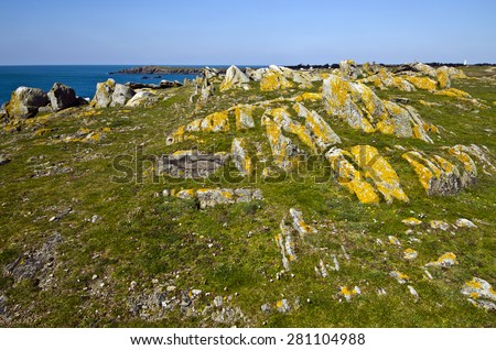 Wild Rocky Coastline in South of Yeu Island with spring flowers and green plants at foreground and  and lonely island houses at fare background. France, Vendee, Pay de la loire