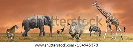 Wild savanna animals collection - stock photo