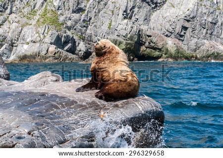 Wild sea lion male rests on a rock in the bay of Pacific ocean - stock photo