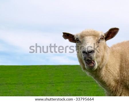 Wild sheep - stock photo