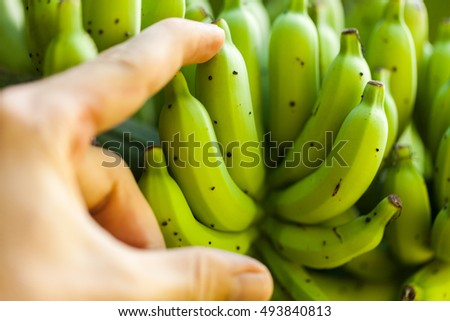 Wild Banana Stock Images, Royalty-Free Images & Vectors  Shutterstock