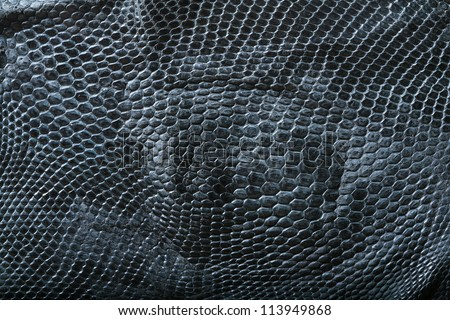 wild snake skin pattern in many style. - stock photo