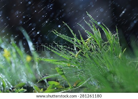 wild spring flowers - stock photo
