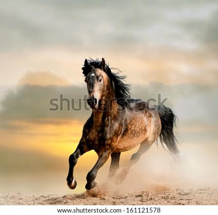 wild stallion in dust - stock photo