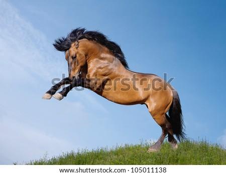 wild stallion playful - stock photo