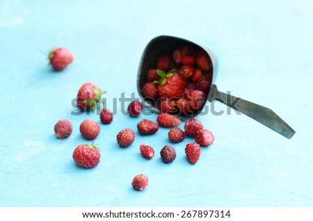Wild strawberry in metal scoop with empty space on blue background - stock photo