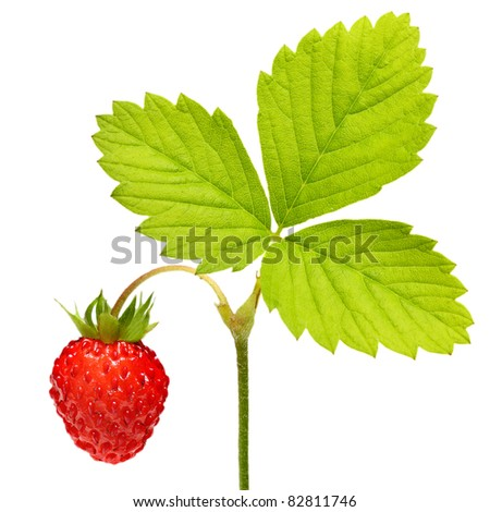 Wild strawberry  macro isolated on white - stock photo