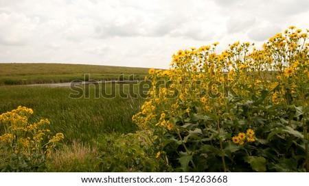 Wild sunflowers frame prairie landscape - stock photo