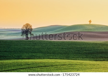 Wild tree against the undulating fields - stock photo