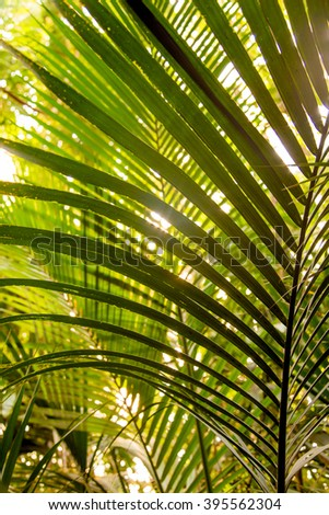 Wild tropical jungle, exotic leaves