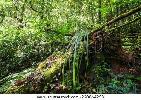 Wild tropical plant growing in deep mossy rain forest. Doi Inthanon park, Thailand nature background - stock photo