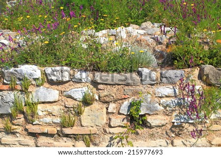 Wild vegetation cover the ancient walls of the Roman city of Nicopolis, Greece