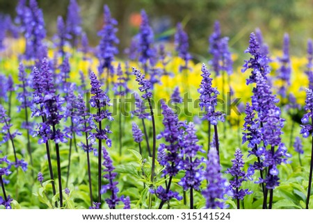 Wild vivid purple flowers in the garden - stock photo