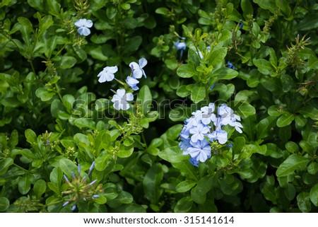 Wild vivid violet flowers in the garden - stock photo