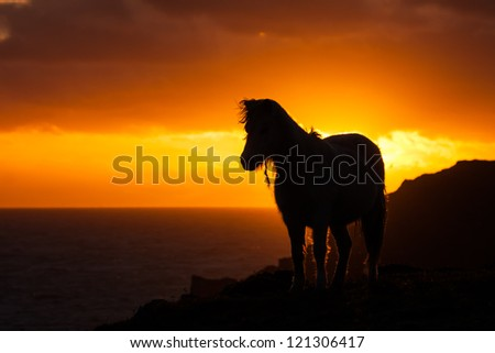 Wild Welsh Pony in the sunset