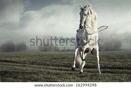 Wild white horse - stock photo