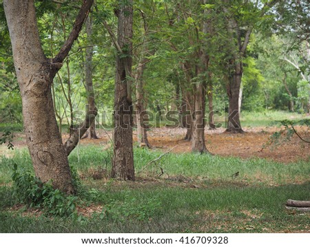 Wild Wood, Forest Tree