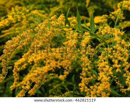 Wild yellow flowers closeup stock photo edit now 462821119 wild yellow flowers close up mightylinksfo