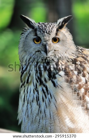 Wild young owl portrait on green background - stock photo