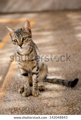 Wild, young, tabby cat with green eyes