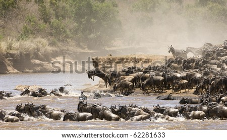 Wilde beast and zebra crossing the Mara river during the great migration - stock photo