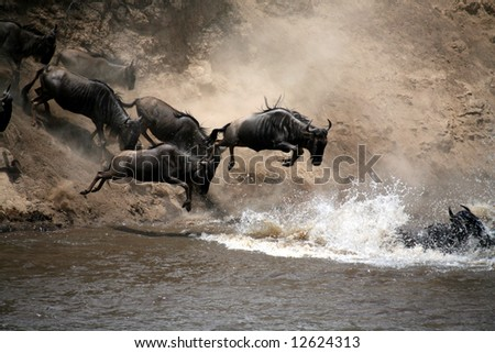 Wildebeest Leap of Faith into the Mara River (Masai Mara; Kenya) - stock photo