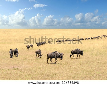 Wildebeest, National park of Kenya, Africa - stock photo