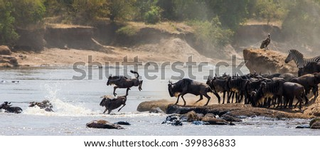 Wildebeests are crossing Mara river. Great Migration. Kenya. Tanzania. Masai Mara National Park. An excellent illustration.