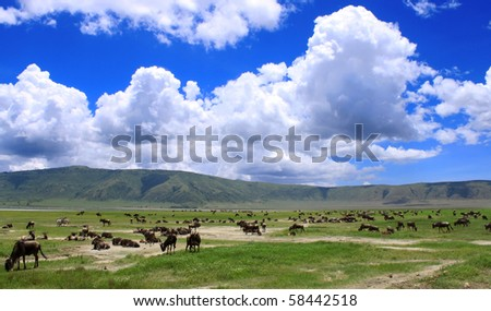 Wildebeests under the dramatic cloudy sky in the Ngorongoro Crater, Tanzania