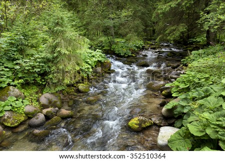 Wilderness about the Creek in summer Low Tatras in Slovakia - stock photo