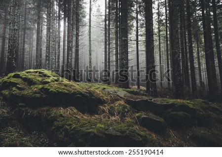 wilderness landscape forest with pine trees and moss on rocks - stock photo