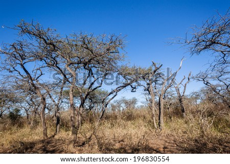 Wilderness Rugged Terrain Wilderness fauna thorn trees aloes flowers rugged bush terrain animal wildlife habitat safari reserves - stock photo