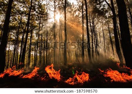 wildfire at Mae Hong sorn ,Thailand - stock photo