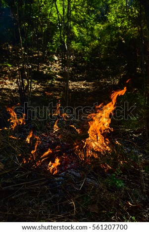 Wildfire grass in summer