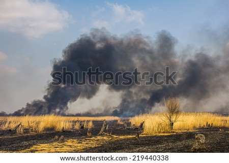 Wildfire in the field with dry grass - stock photo