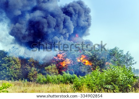 wildfire in the summer forest - stock photo