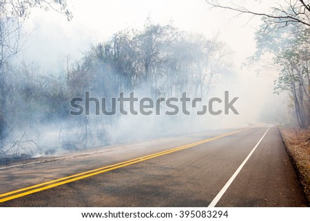 Wildfire roadside - stock photo