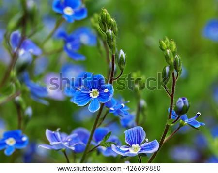 wildflower - stock photo