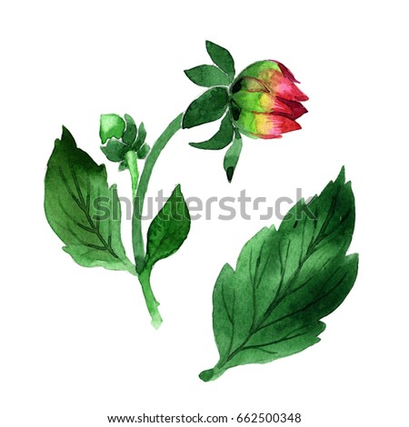 smoking the plants with dried leaves investigatory project Army public school, basistha investigatory  basistha investigatory project on  sir walter raleigh famously introduced dried tobacco leaves.