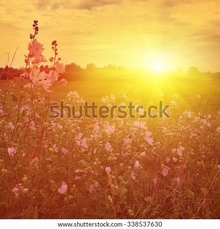 Wildflower field and dramatic sunset. - stock photo