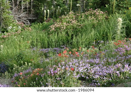 Wildflower field in Glacier National Park - stock photo