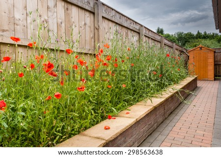 Wildflower Garden / A raised Wildflower Garden consisting mainly of poppies and corncockle in July - stock photo